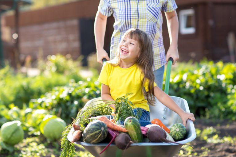 Gesundes Gemüse durch VitaDung Naturdünger