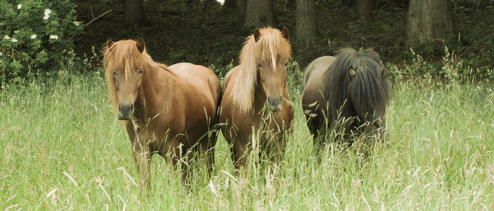 Dünger aus Pferdeäpfel
